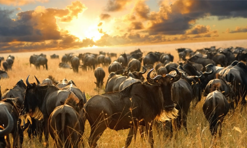 Tour Tanzania – Great Migration Serengeti (Jun/Oct) 6 notti
