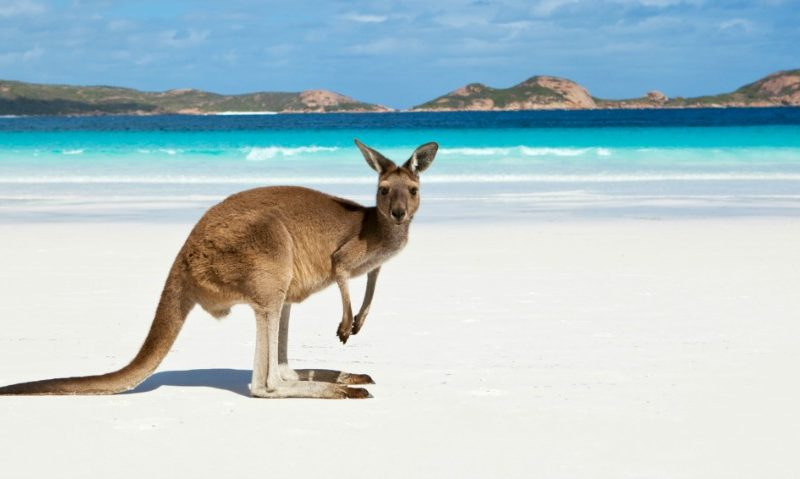 Tour AUSTRALIA 02 – 2 Days/1 Night Kangaroo Island – cruise