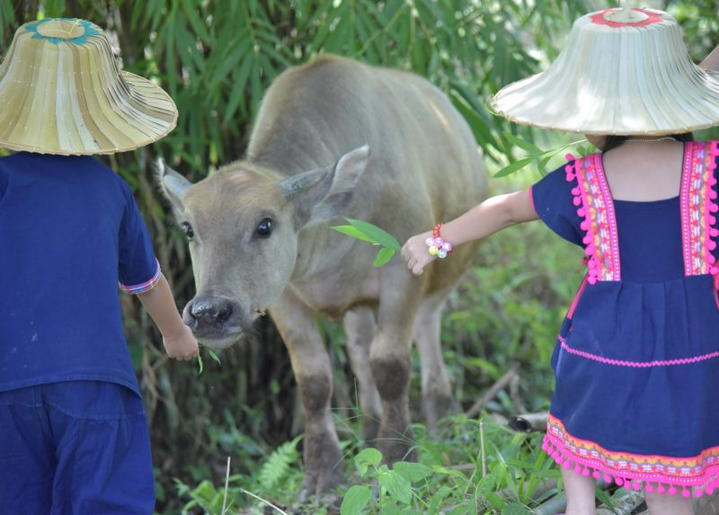 6D NORTH THAILAND FARMSTAY & MEKONG